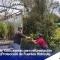 ENTREGA DE 1500 PLANTAS PARA LA REFORESTACION EN EL SECTOR DE CUNCAY.